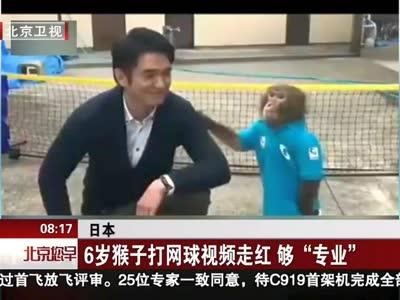 """[视频] 6岁猴子打网球视频走红 够""""专业"""""""