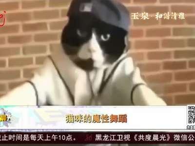 [视频]猫咪的魔性舞蹈