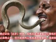 印度男子用眼镜蛇泡酒,一个月后开封却被狠狠咬伤