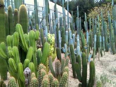 植物园(三)沙生仙人掌园