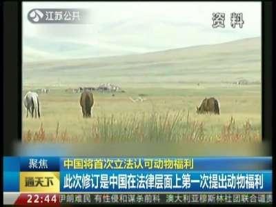 中国将首次立法认可动物福利:已写入野生动物保护法
