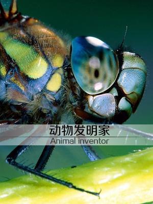 动物发明家