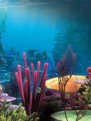 魅力珊瑚礁—猎人与猎物
