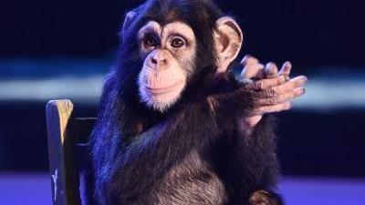 猩猩处女秀飞吻调侃评委  伊朗小伙爆笑模仿地方语言