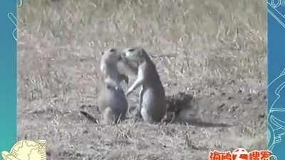 动物世界的和谐