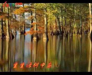 大森林的早晨[雨广演唱]图片