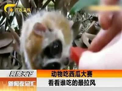 动物吃西瓜萌态大pk