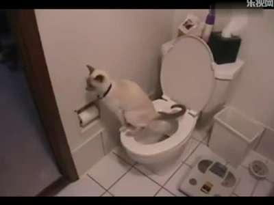 主人教猫咪用马桶,赞!