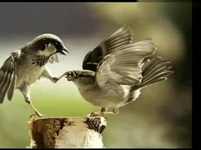 动物界也有如此大胆剽悍的情侣!