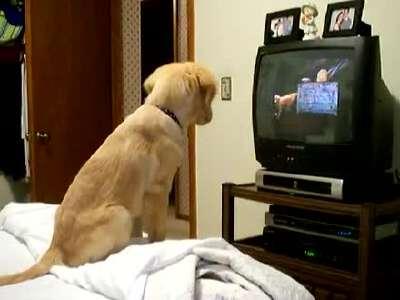 独自看电视的狗狗