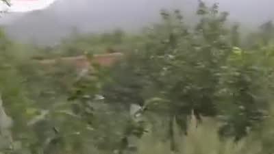 大山里的那些树