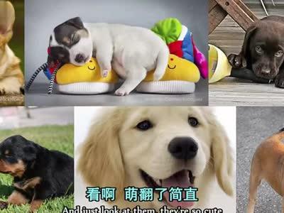 宠物狗可以帮助未出生的婴儿增强免疫力!