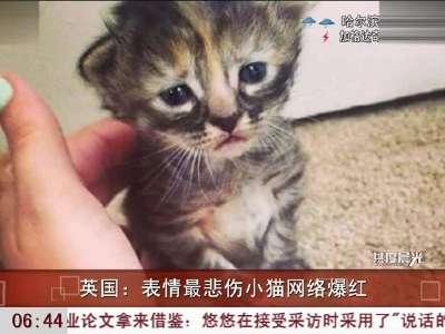 表情大全 忧伤的动物表情 > 英国表情悲伤小猫  狗狗表情读解 (363