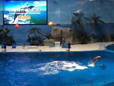 齐河泉城海洋极地世界看动物表演 (2)