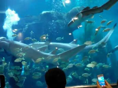 青岛海底世界人鱼表演