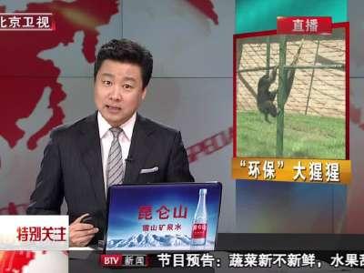 """北京:野生动物园里的""""环保""""大猩猩"""