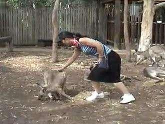 可爱动物- 在线观看