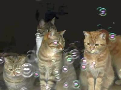 泡泡泥动物手工图片 小猫